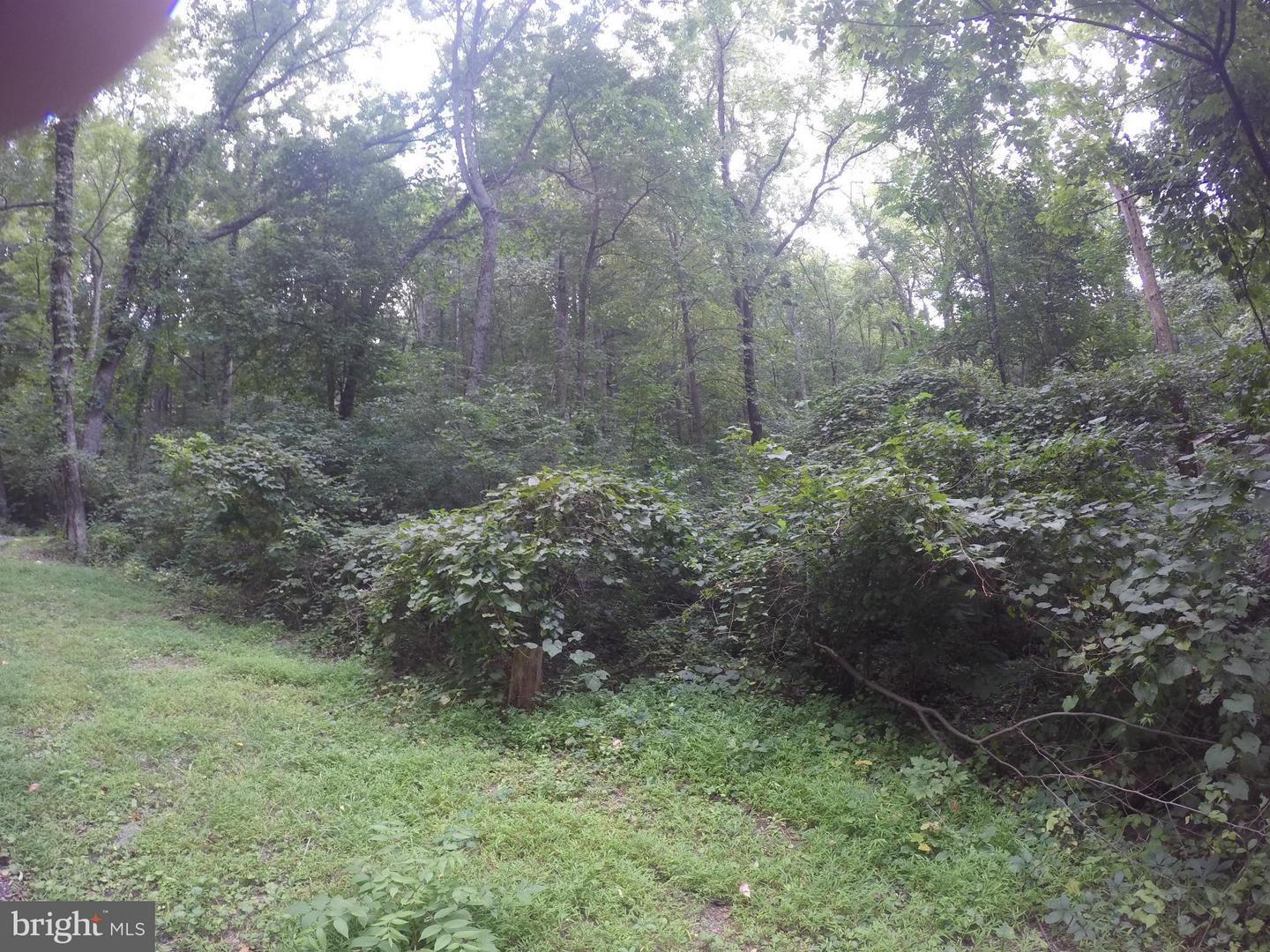 Land for Sale at Oriole Ct Front Royal, Virginia 22630 United States