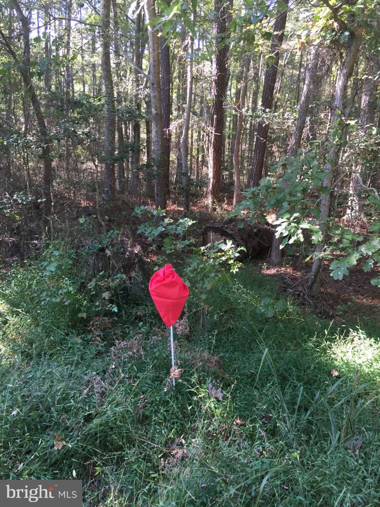 Land for Sale at Porter Rd Issue, Maryland 20645 United States