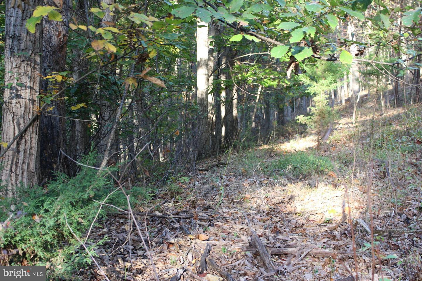 Land for Sale at Shannon Woods Dr Front Royal, Virginia 22630 United States