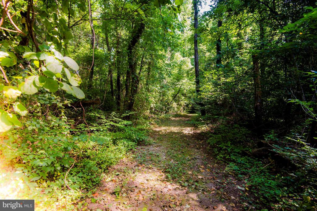 Meandering path on back of property - 5524 SUMMIT ST, CENTREVILLE