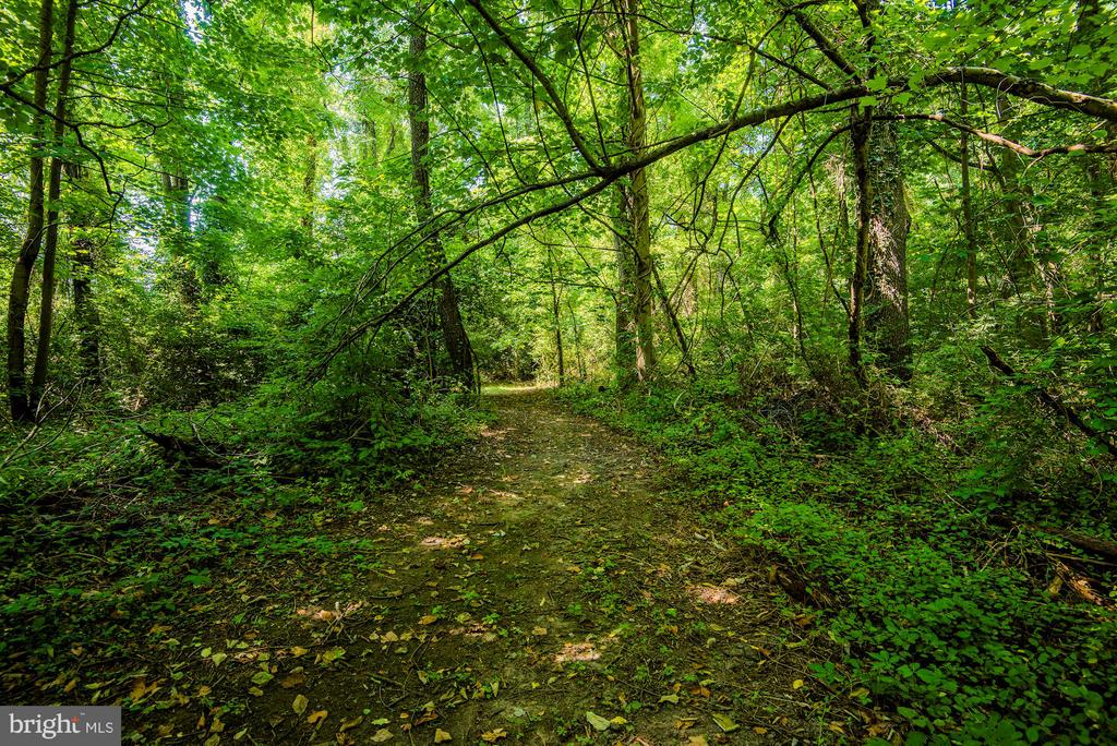 A walking path under a canopy of luscious greenery - 5524 SUMMIT ST, CENTREVILLE