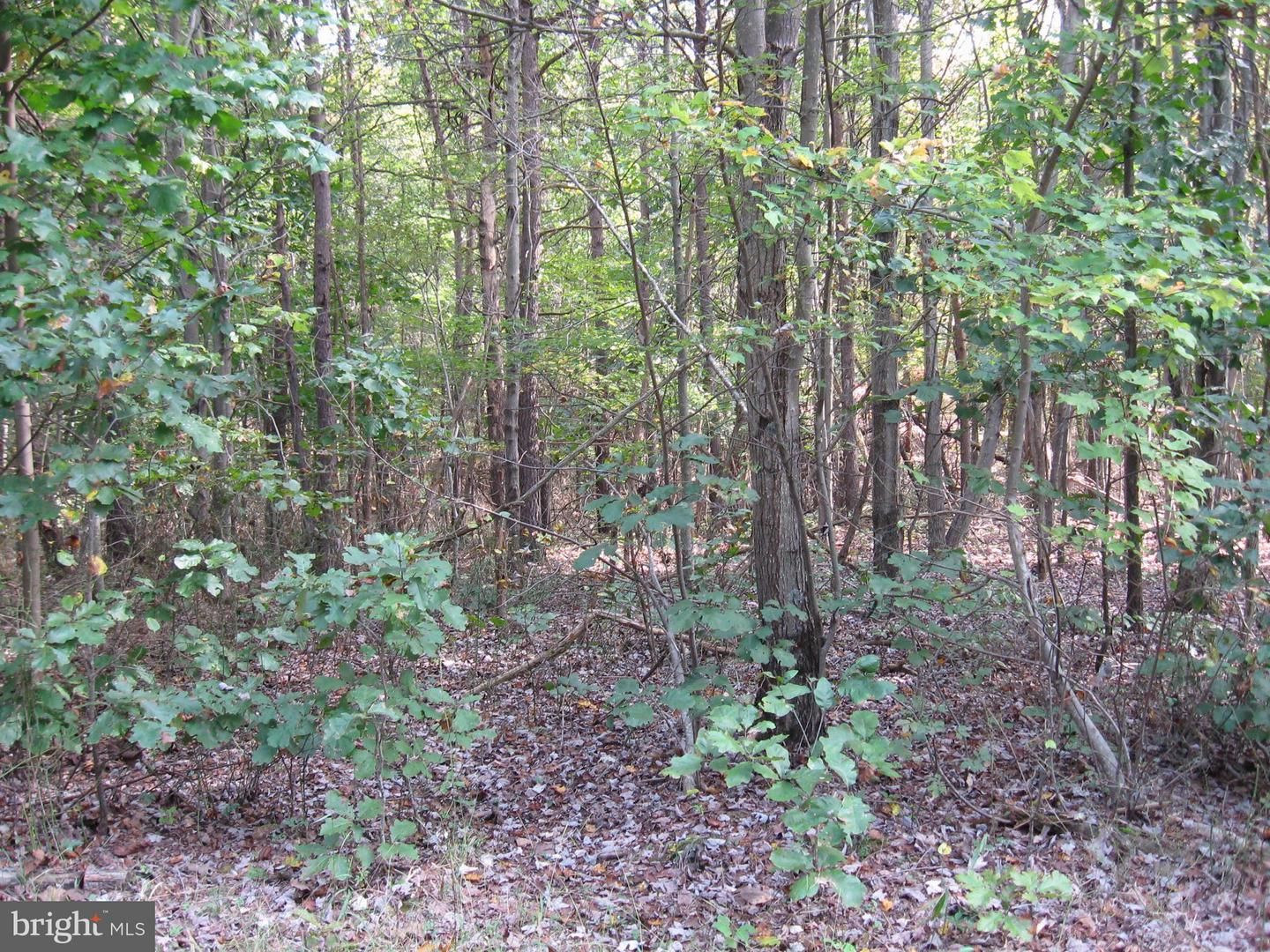 Land for Sale at Spook Hollow Lane Berkeley Springs, West Virginia 25411 United States