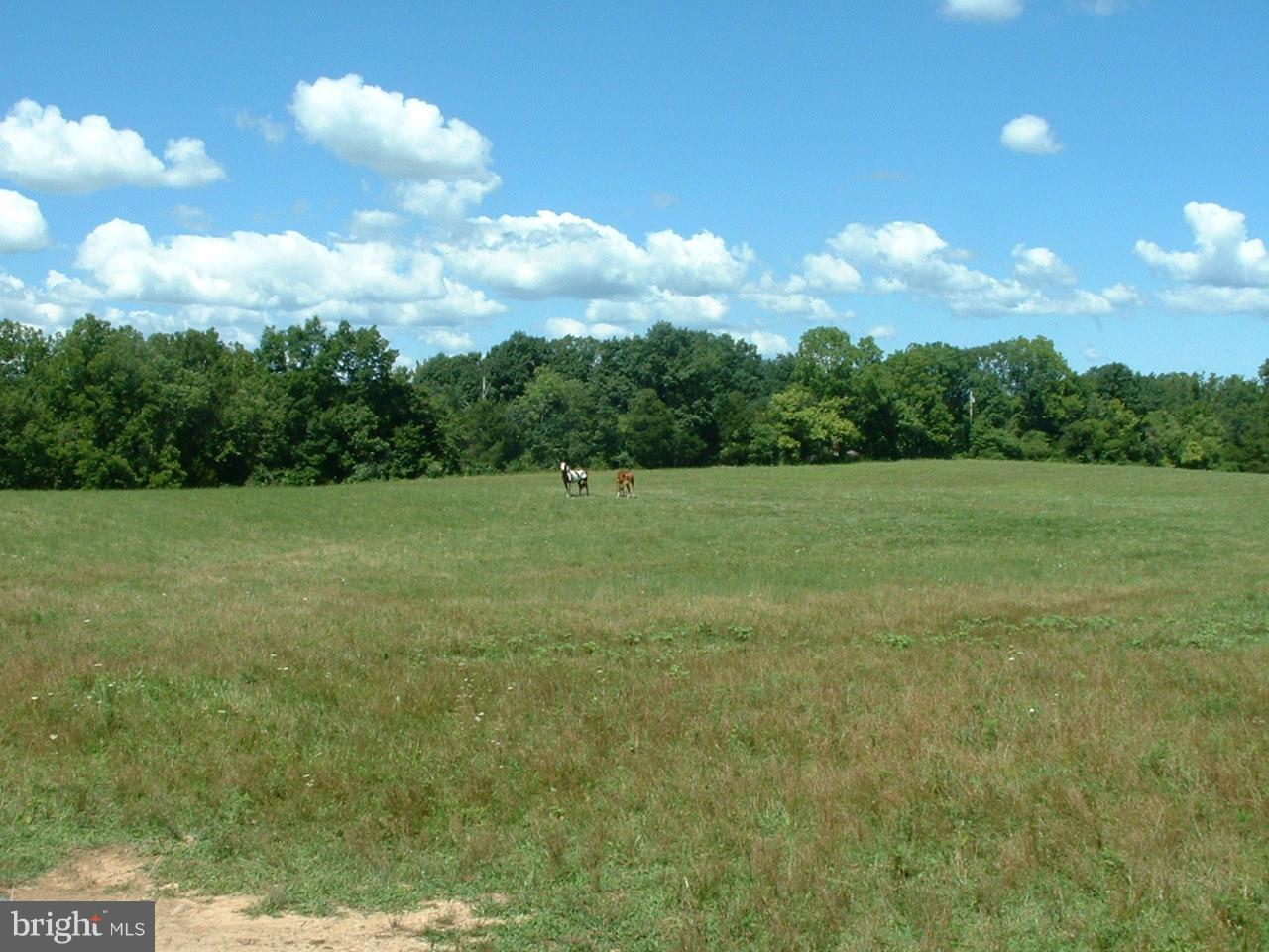 Photo of home for sale at Bucks Mill Road, Strasburg VA