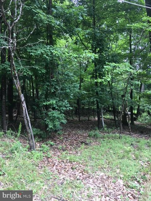Land for Sale at Cedar Ln Bluemont, Virginia 20135 United States