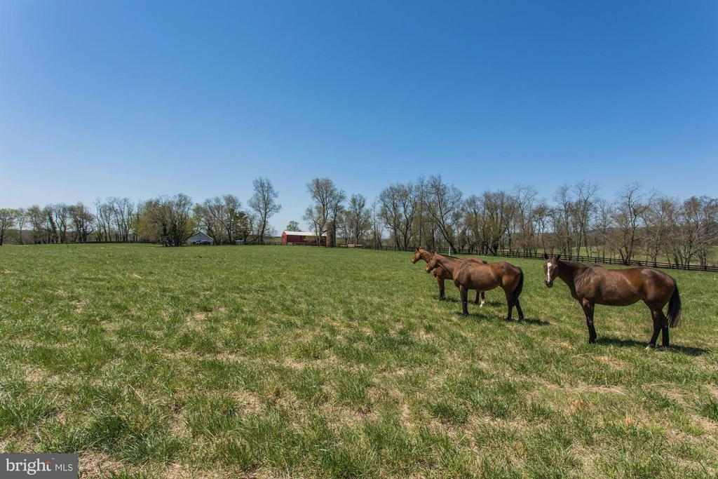 One of the pastures for the horses. - 35676 SNICKERSVILLE TPKE, PURCELLVILLE