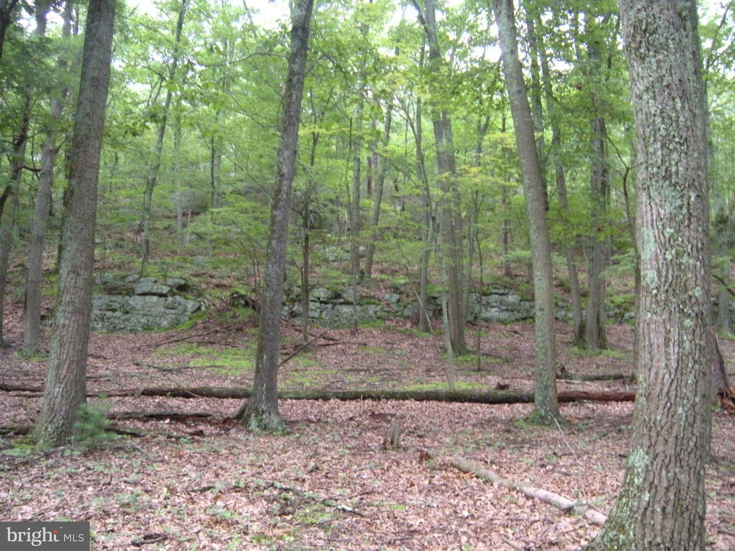 Additional photo for property listing at 15lot # Hoover Young Dr  Capon Bridge, West Virginia 26711 United States