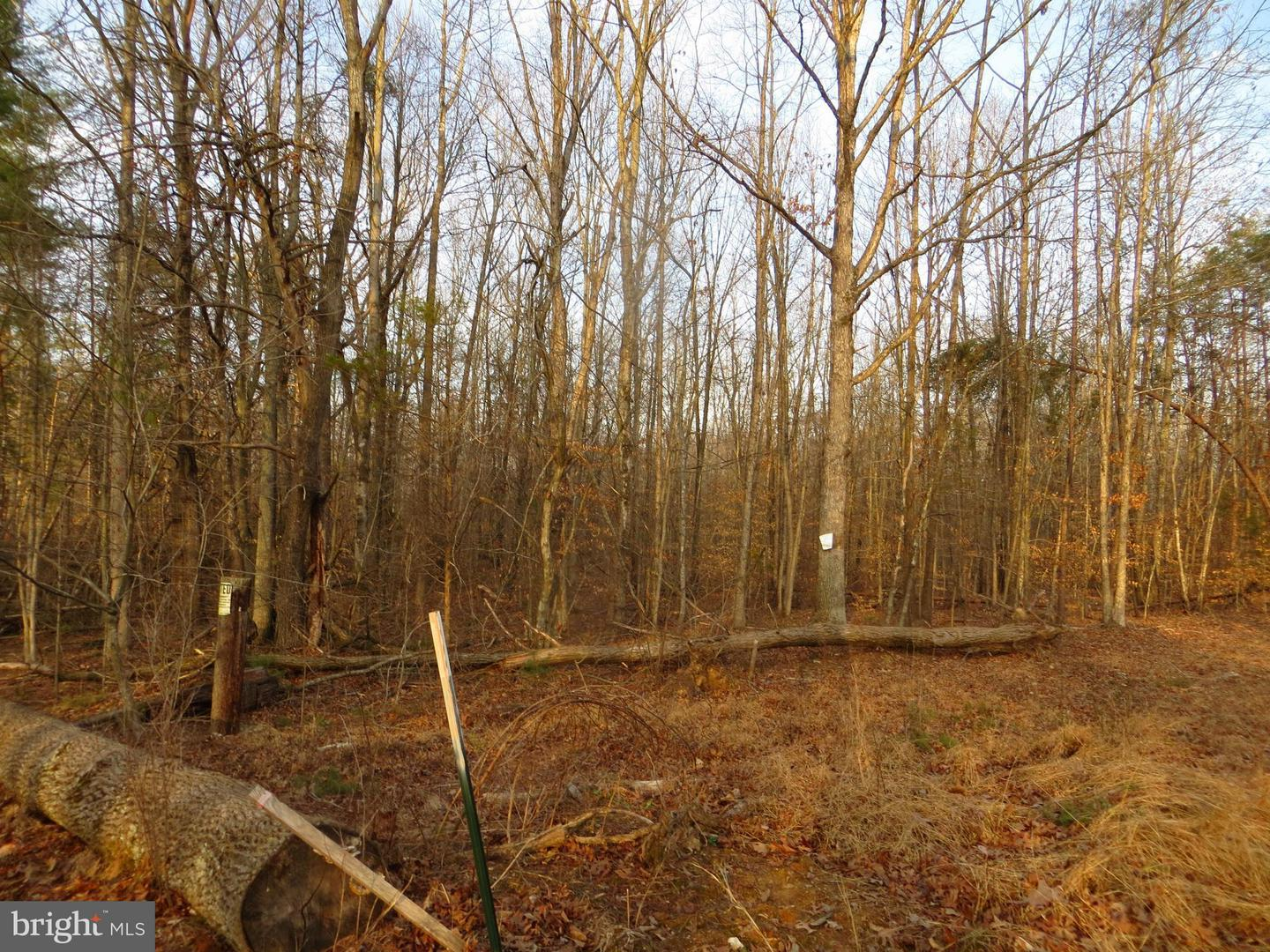 Land for Sale at Zachary Taylor Hwy Unionville, Virginia 22567 United States