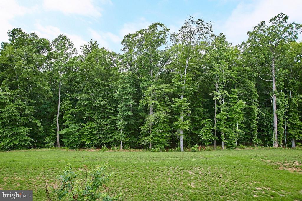 View from deck - House backs to trees! - 16636 DANRIDGE MANOR DR, WOODBRIDGE
