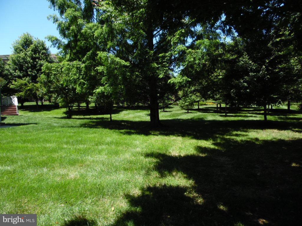 .39 Acre Lot with Large Back ard - 23077 OGLETHORPE CT, ASHBURN