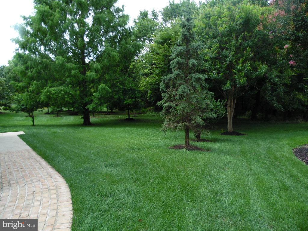 Side Yard - 23077 OGLETHORPE CT, ASHBURN