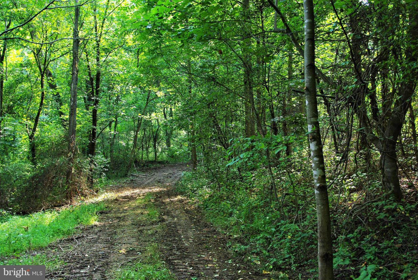 Land for Sale at 0 Withers Mill Rd Huntly, Virginia 22640 United States