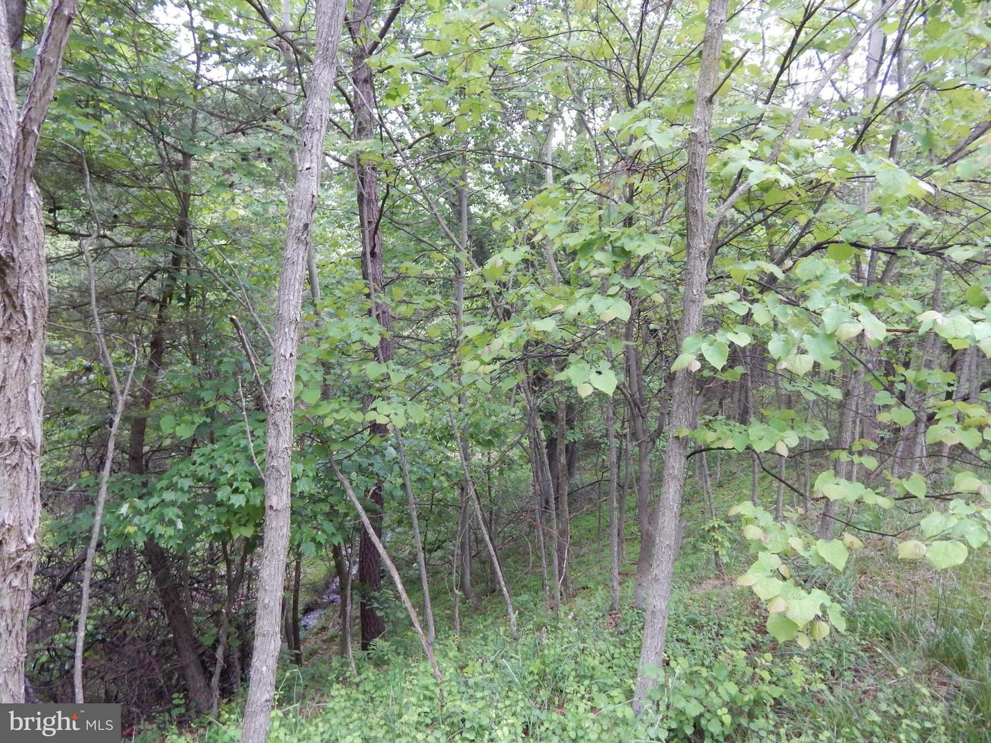 Additional photo for property listing at Basils Ln  Gerrardstown, West Virginia 25420 United States