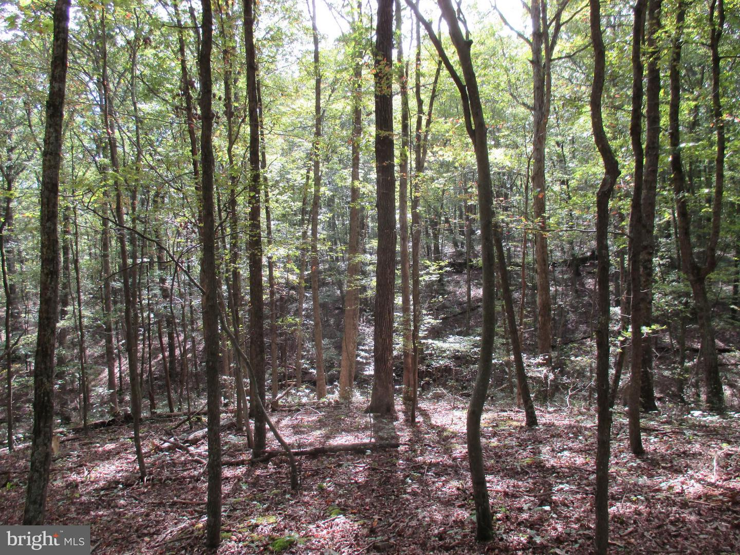 Land for Sale at River Rd. Fisher, West Virginia 26818 United States