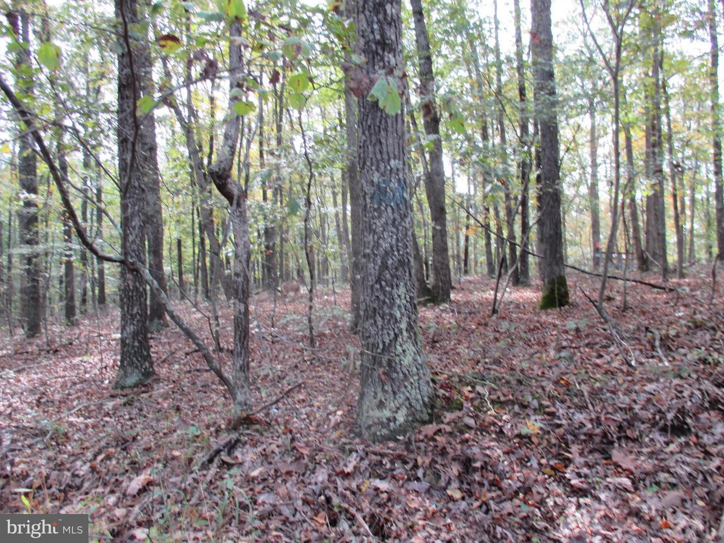 Land for Sale at 0 River Rd Fisher, West Virginia 26818 United States