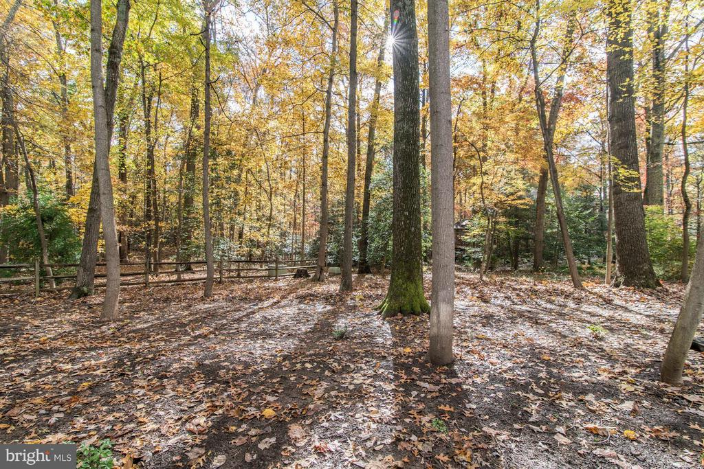Beautiful, private wooded rear yard - 11903 TRIPLE CROWN RD, RESTON