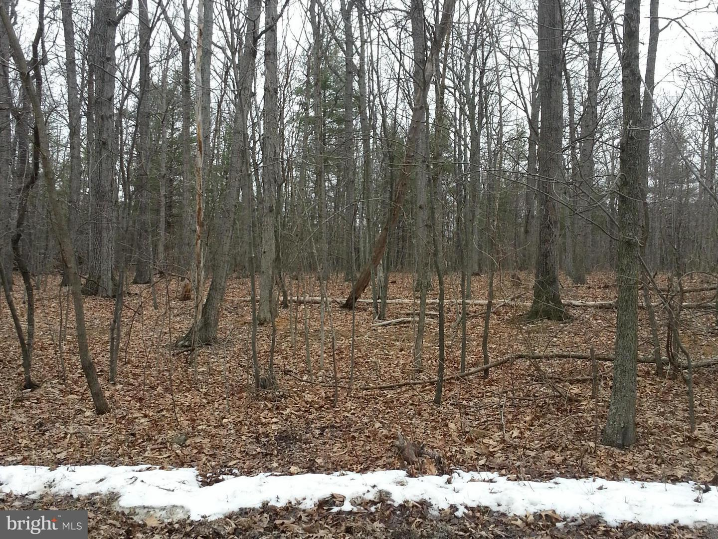 Land for Sale at 0 Fairview Church Rd Gore, Virginia 22637 United States