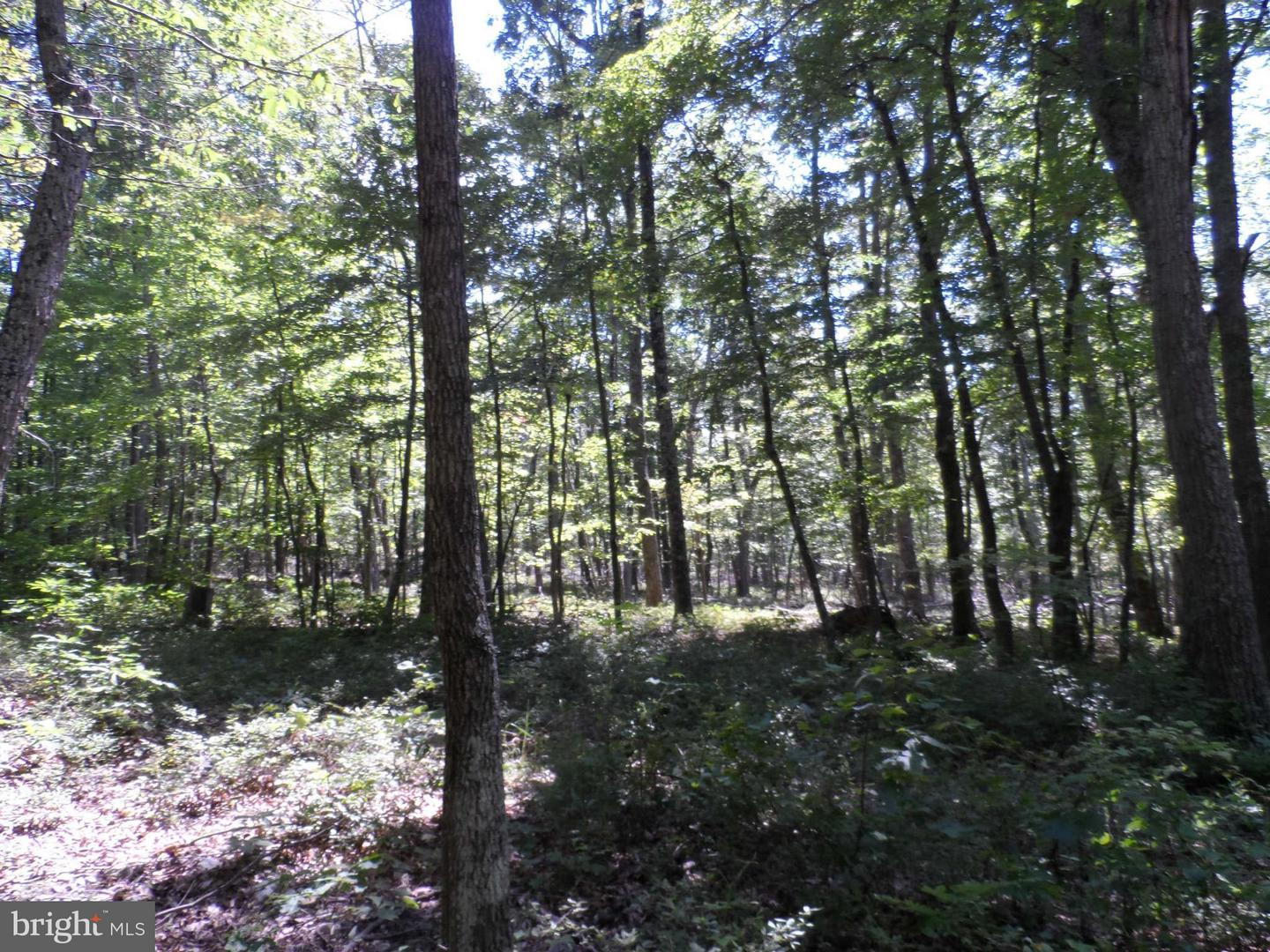 Additional photo for property listing at Hunters Rd  Gore, Virginia 22637 United States