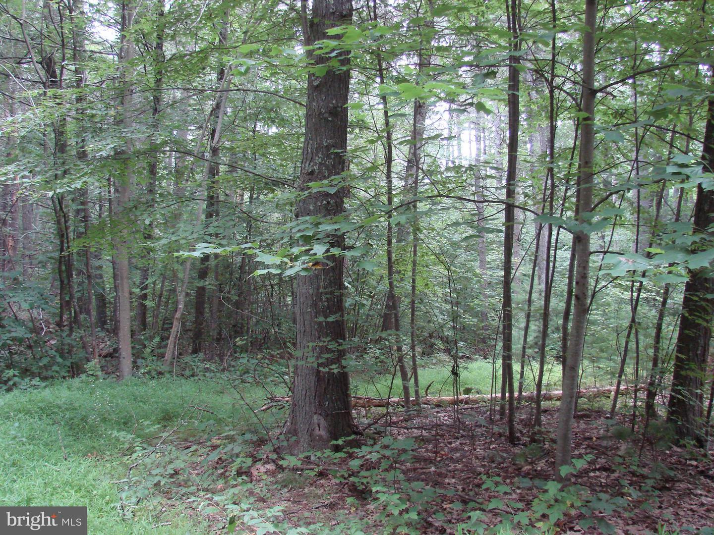 Additional photo for property listing at Off Printz Mill Rd.  Luray, Virginia 22835 United States