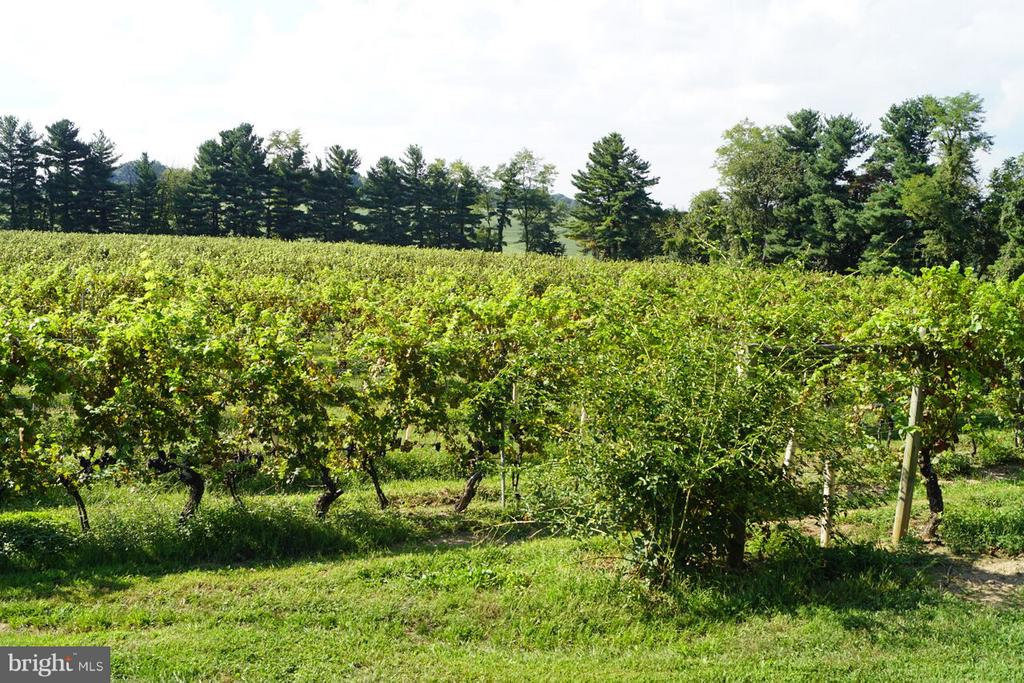 Vines - 15113 LIBERTY RD, MOUNT AIRY