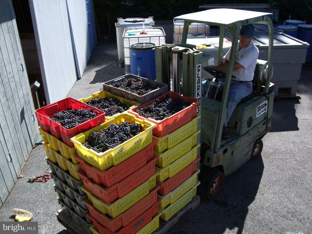 Grapes have been picked - 15113 LIBERTY RD, MOUNT AIRY