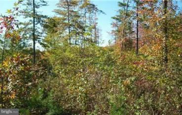 Additional photo for property listing at  Berkeley Springs, Tây Virginia 25411 Hoa Kỳ