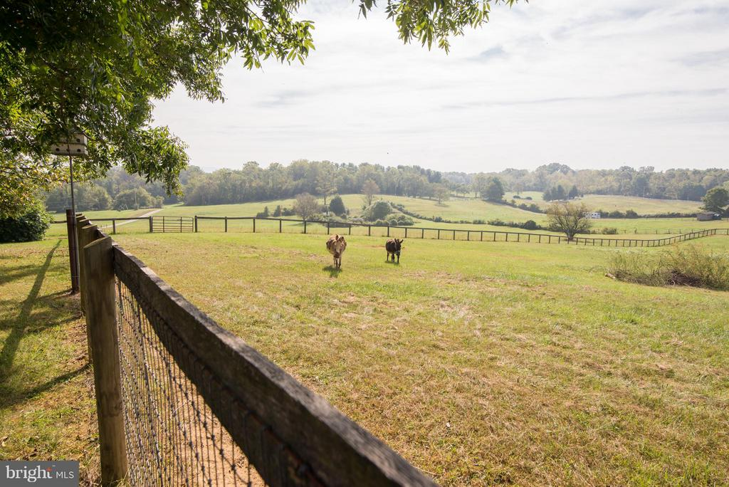 Great place for donkeys, horses, goats etc! - 192 CHESTNUT LN, BERRYVILLE