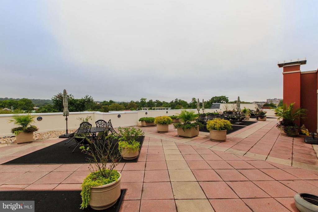 Community roof deck - 1115 CAMERON ST #305, ALEXANDRIA
