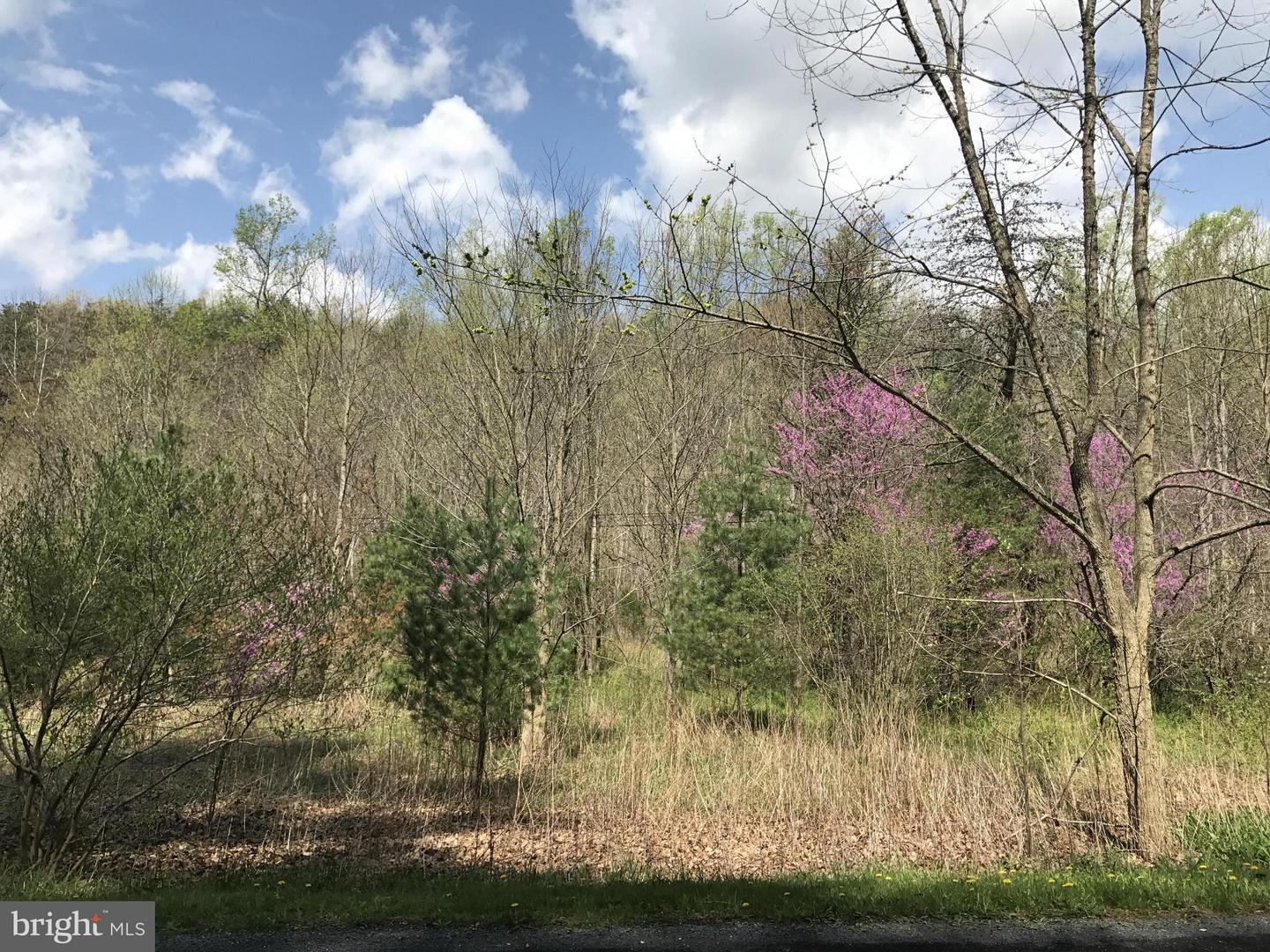 Additional photo for property listing at Not On File  Gore, Virginia 22637 United States