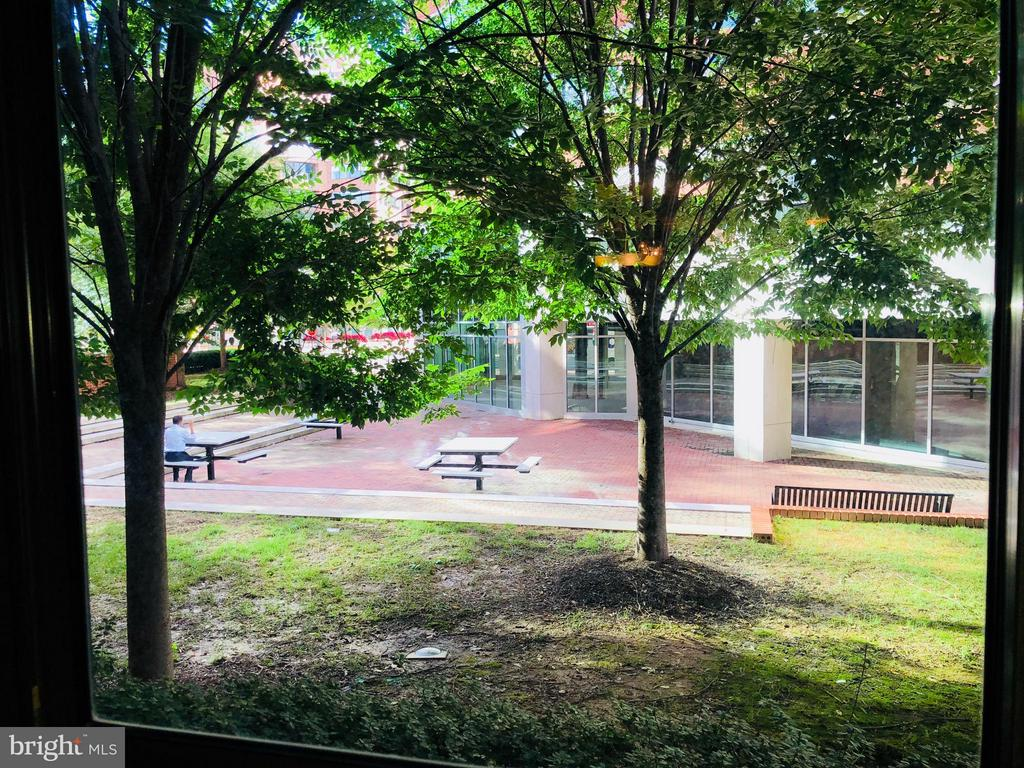 View from Sunroom - 1001 N VERMONT ST #106, ARLINGTON