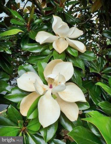 Magnolias on property - 19370 MAGNOLIA GROVE SQ #108, LEESBURG