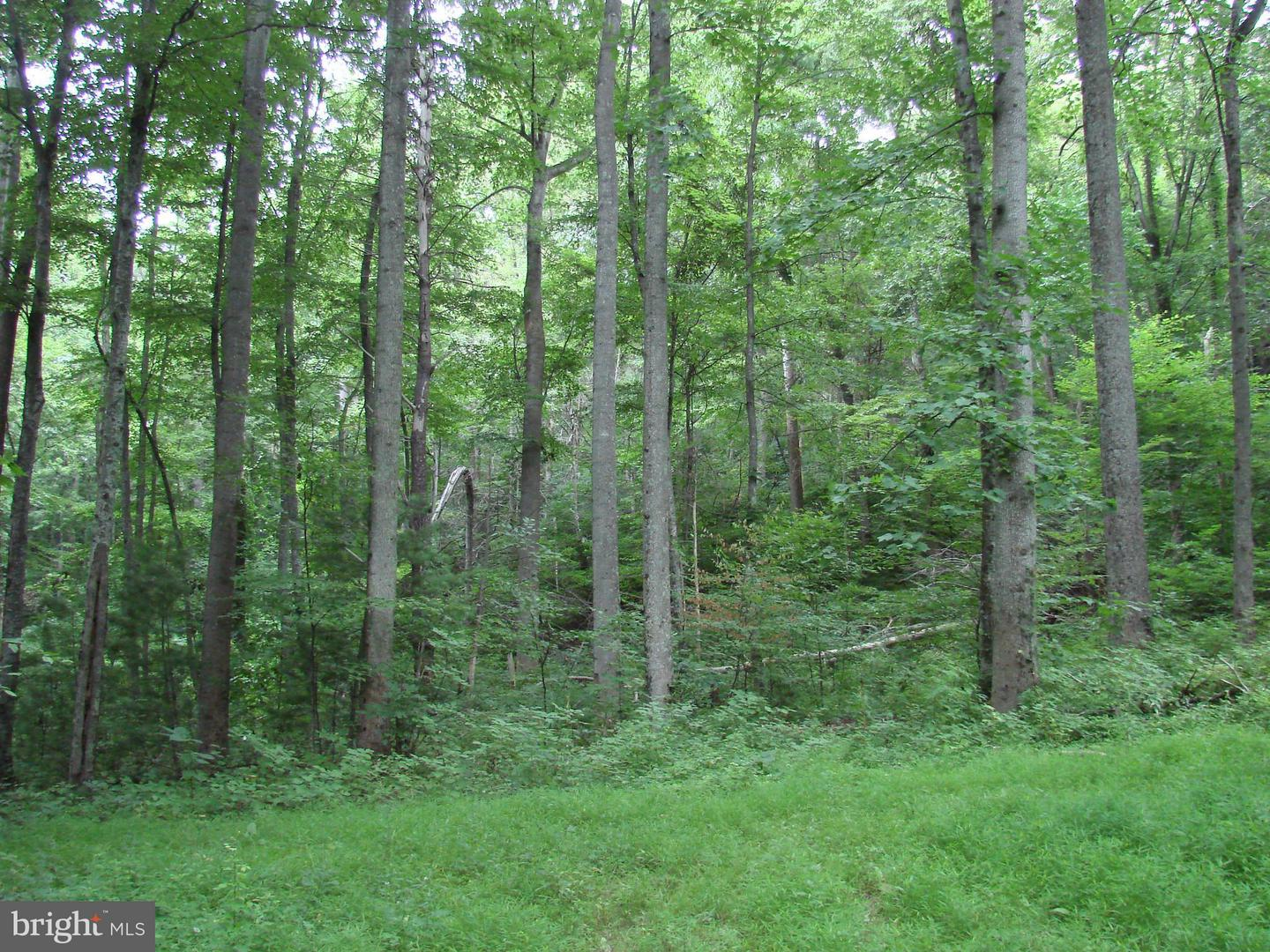 Photo of home for sale at Off Printz Mill Rd., Luray VA