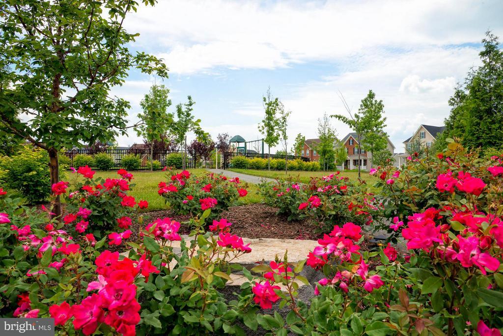 Community Parks - 43021 GREGGSVILLE CHAPEL TER #109, ASHBURN