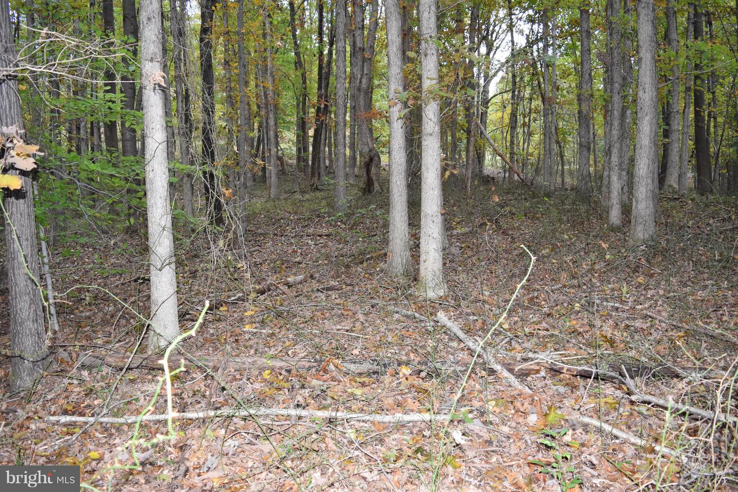 Land for Sale at 38-Lot Browntown Rd Front Royal, Virginia 22630 United States