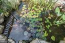 Stocked Koi Pond - 942 FRANKLIN ST, WINCHESTER