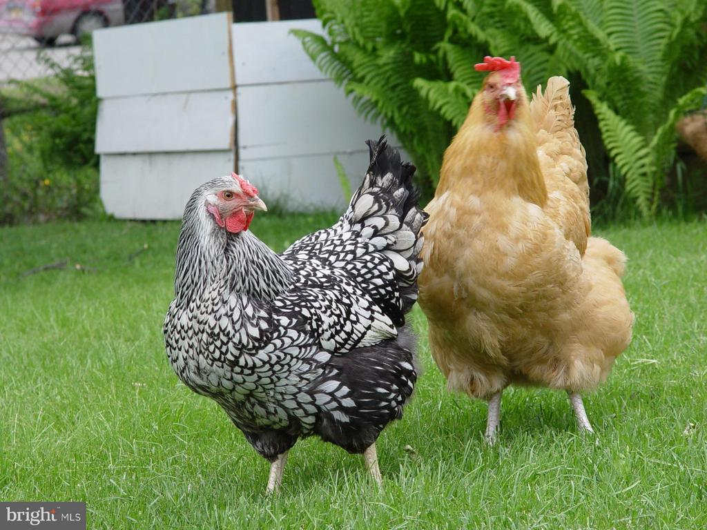 Chickens allowed! - 1 JACOBS HILL COURT, LEESBURG