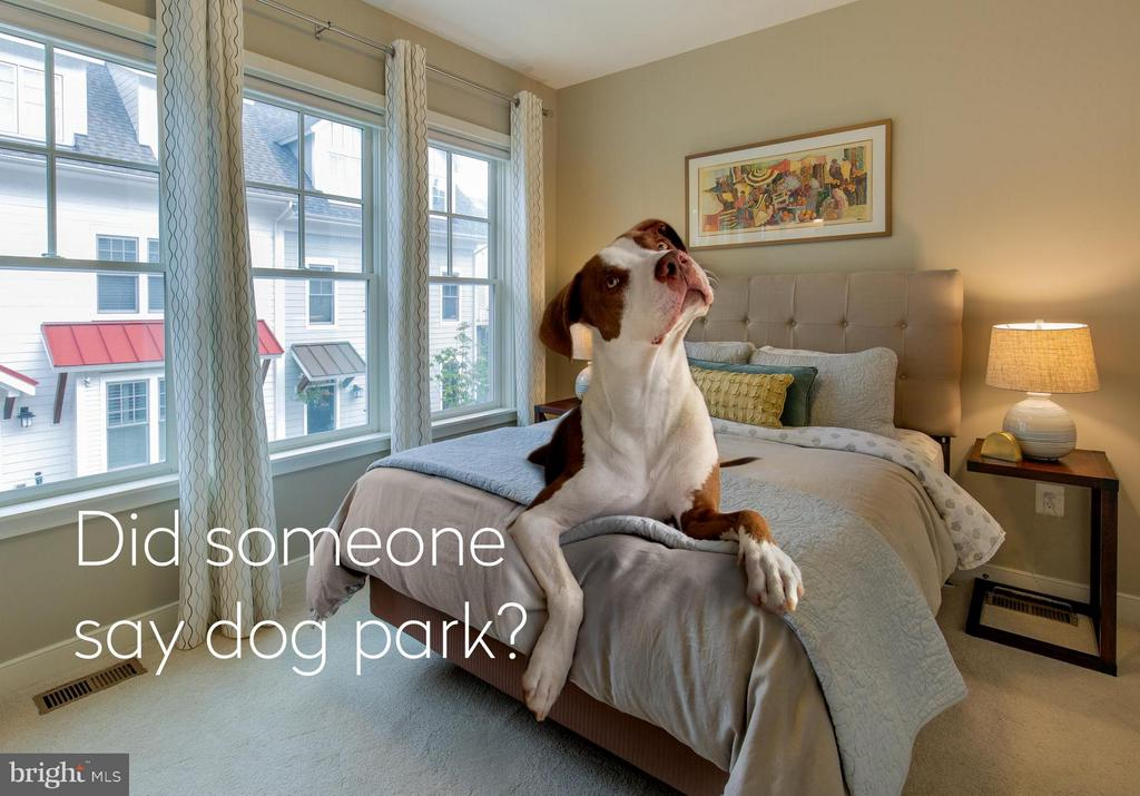 Did someone say dog park? - 43 ELLSWORTH HEIGHTS ST, SILVER SPRING