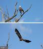 Eagles abound in Goose Creek - 23057 KIRK BRANCH RD, MIDDLEBURG