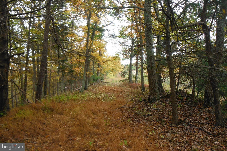 土地,用地 为 销售 在 Milam, 西弗吉尼亚州 26838 美国