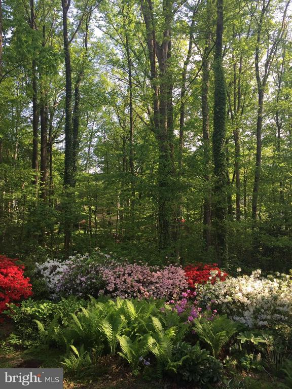 Blooming in Spring - 11657 GILMAN LN, HERNDON