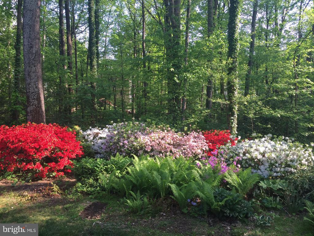 The springtime garden - 11657 GILMAN LN, HERNDON