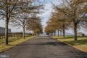 Paved Driveway of Matured Trees - 42692 LUCKETTS RD, LEESBURG