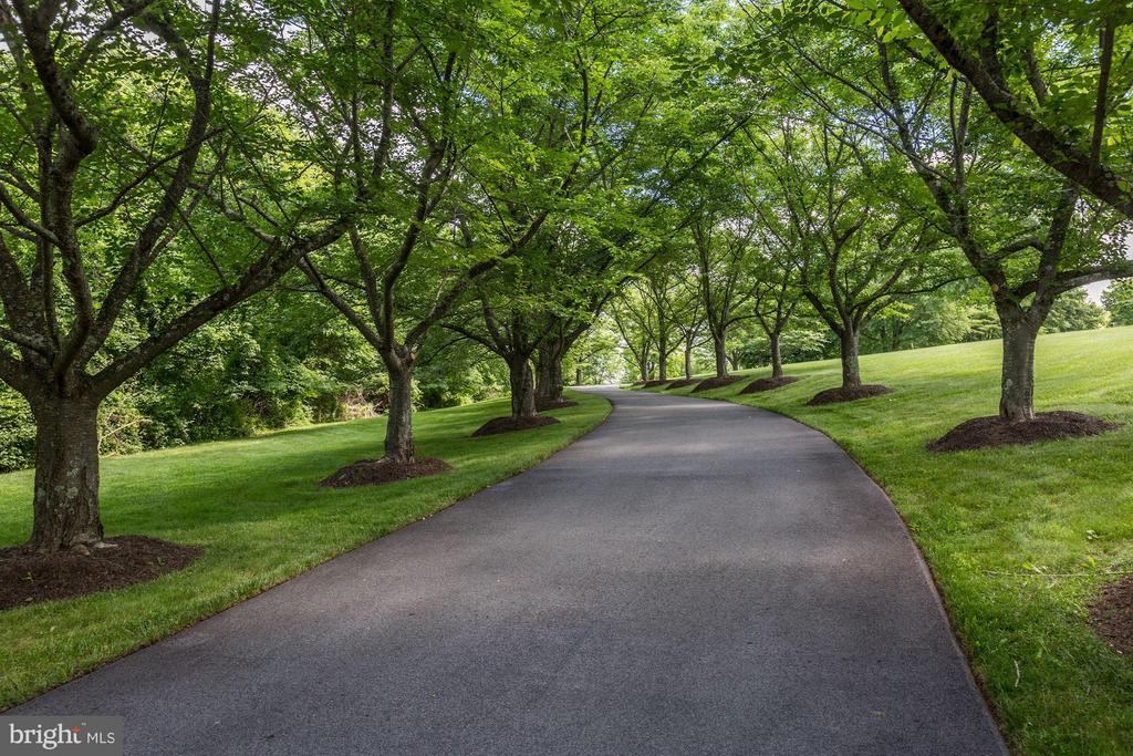 Tree-lined promenade - 1001 MURPHY DR, GREAT FALLS