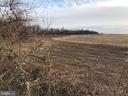 Farm to Rear Trees On Back-line of 10.3 Acres - 1919 CASTLEMAN RD, BERRYVILLE