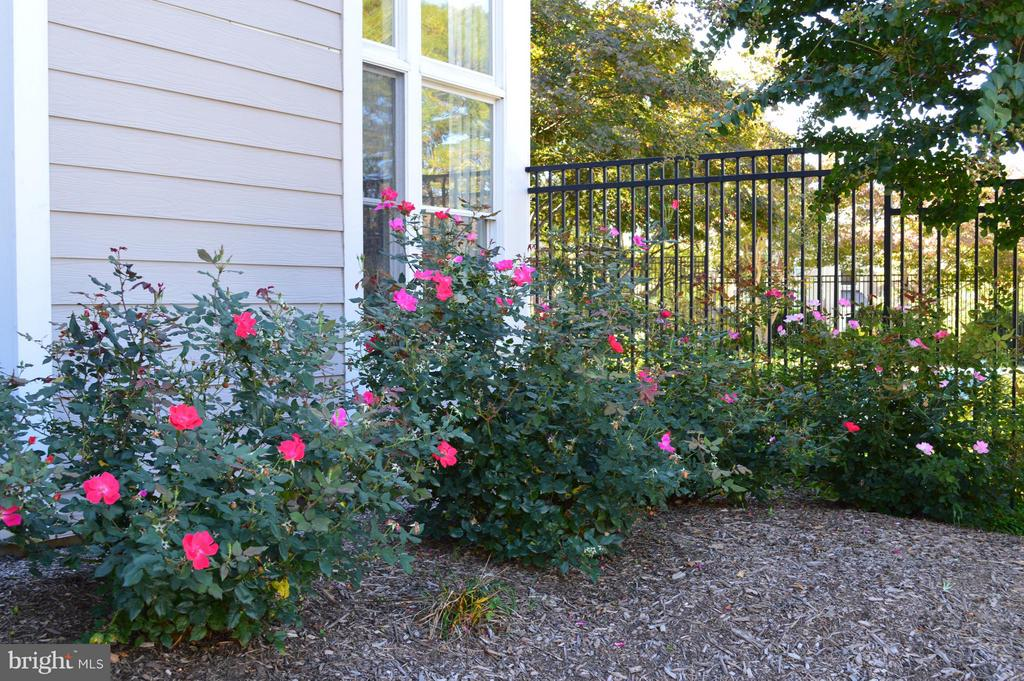 Springtime photos tell the story of Sanderling - 14320 CLIMBING ROSE WAY #203, CENTREVILLE