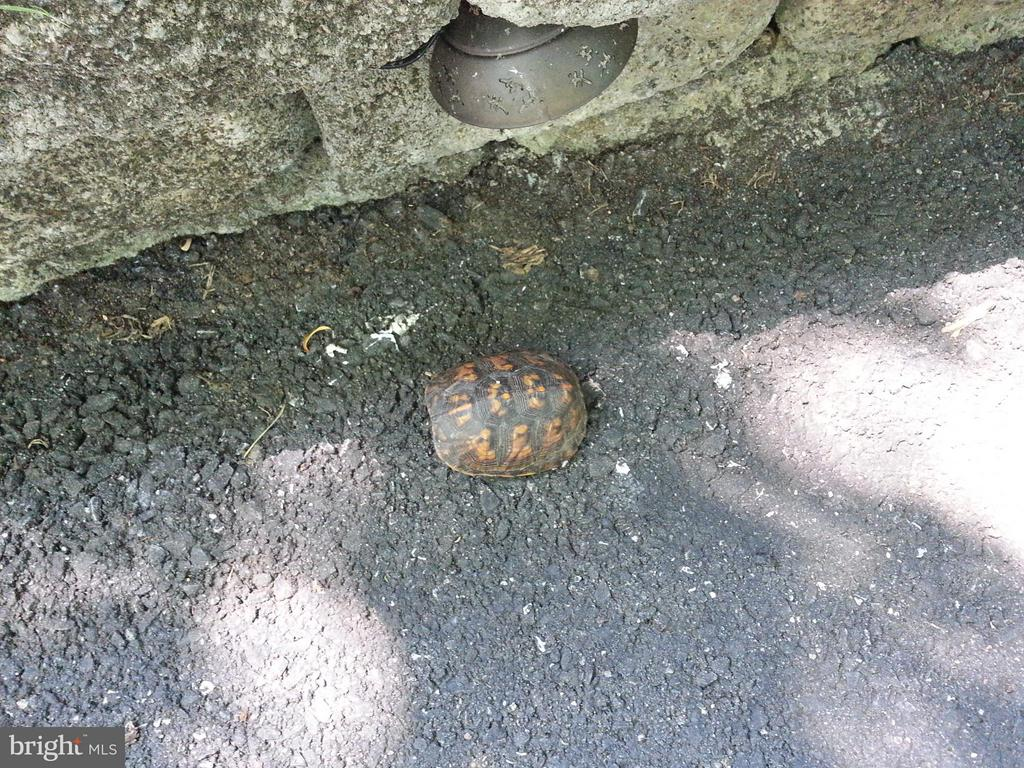 Henry the Turtle - 7305 BEECHWOOD DR, SPRINGFIELD