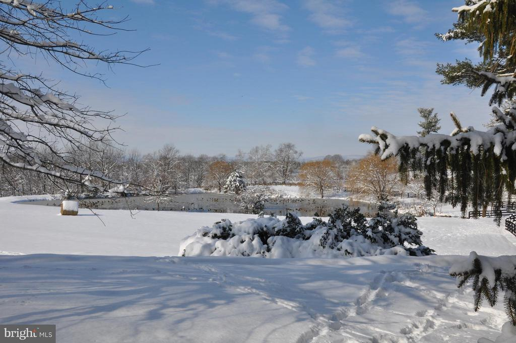 40 acres overlooking the pond and stream - 40041 HEDGELAND LN, WATERFORD
