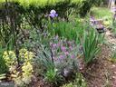 Springtime Flowers! - 20 BOB WHITE LN, STAFFORD