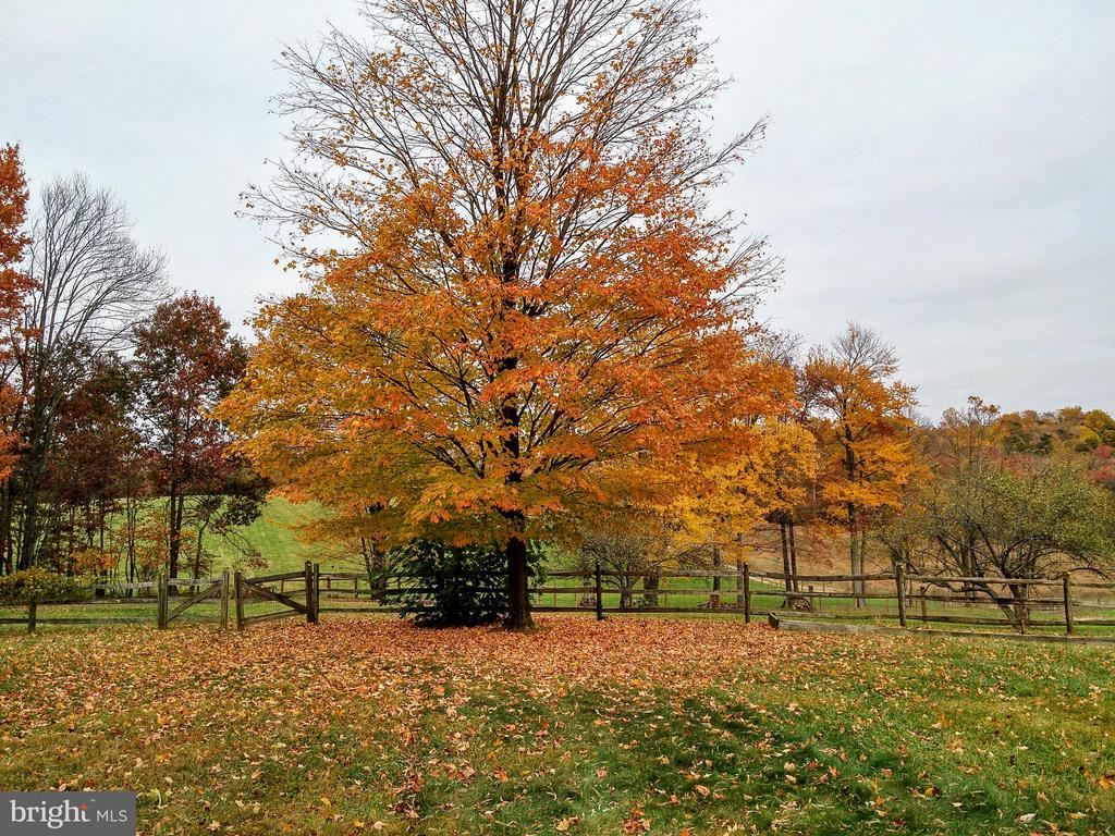 Fall Colors - 16120 BARNESVILLE RD, BOYDS