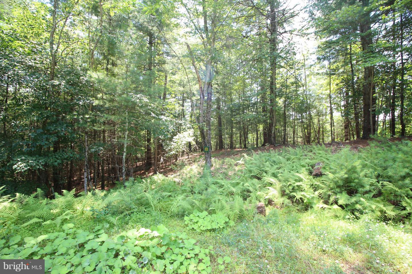 Land for Sale at Lot 8 High Point Drive Wardensville, West Virginia 26851 United States