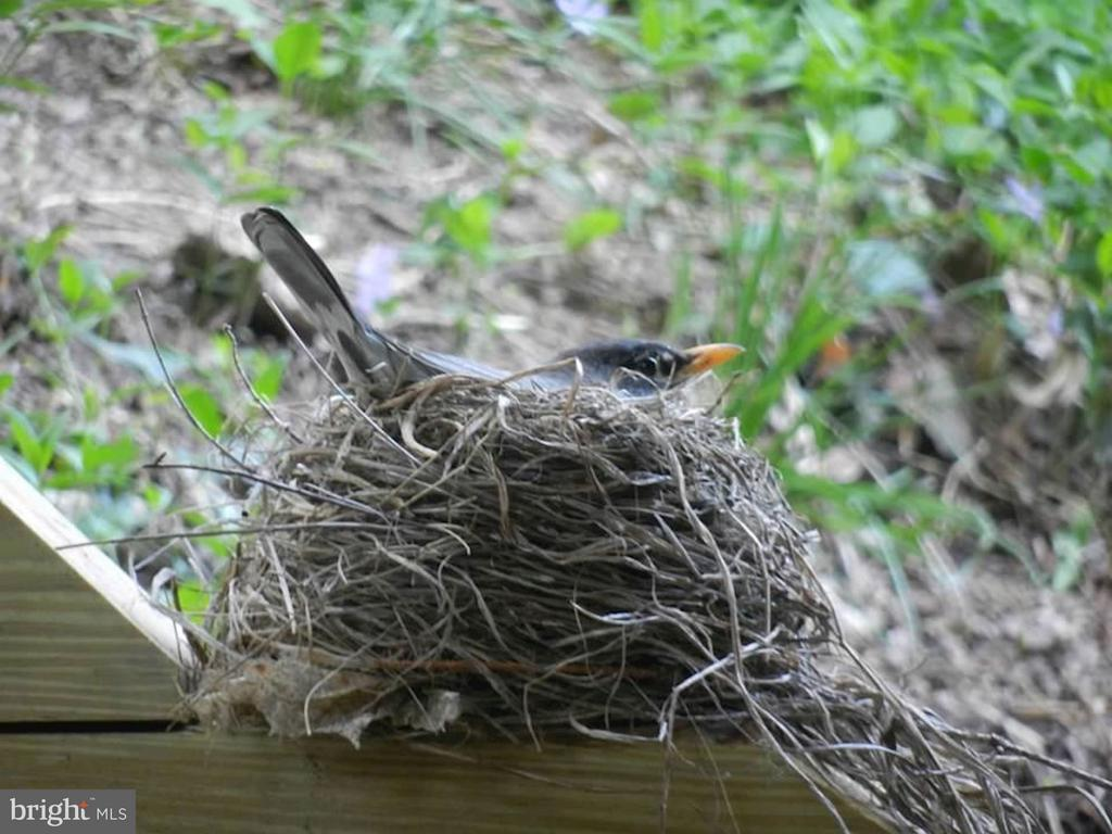 Spring near Rock Creek Park - 5704 OREGON AVE NW, WASHINGTON